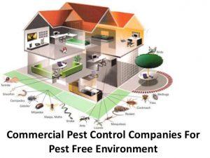 Commercial pest control Brisbane